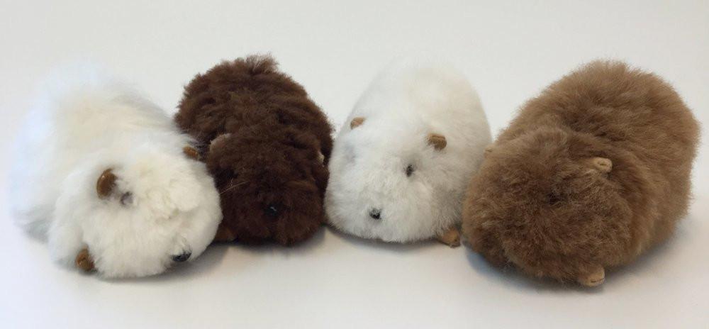adorables bebes de cobaya alpaca